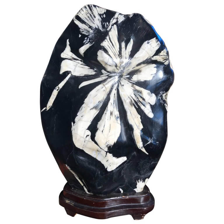Exquisite large chrysanthemum flower viewing stone for Exquisite stone