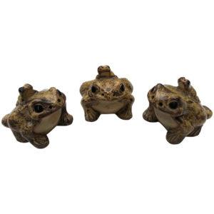 Piggyback frog family trio
