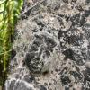 Buddha of Compassion Stone Shrine