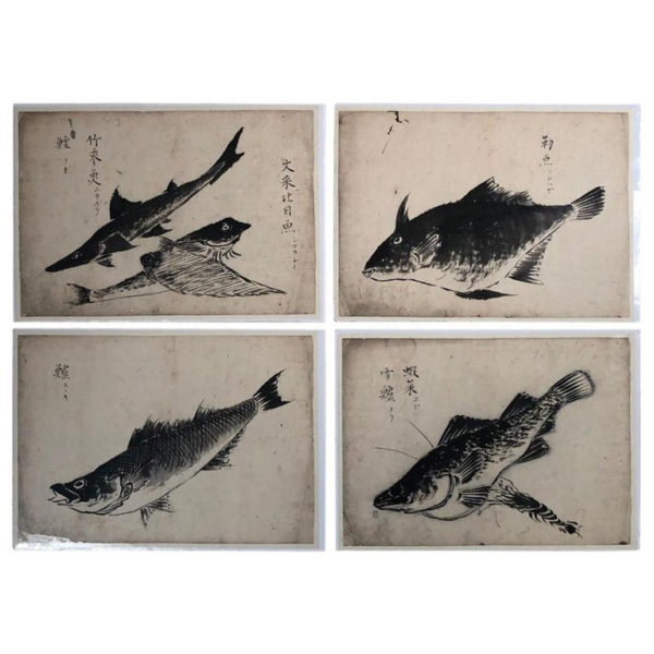 Sumi Ink Nautical Fish Drawings