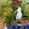 "Japan Antique White Garden ""Moon Gazing"" Rabbit"